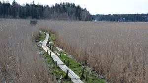 Vandringsled vid Vaarniemi naturskyddsområde.