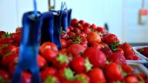 Korgar med jordgubbar