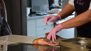 En brax som håller på att fileas i ett kök