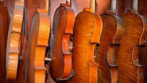 Några av Leif Kronqvists violiner