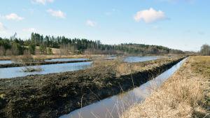 En våtmark som byggts i närheten av en åker. I bakgrunden syns skog.