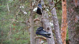 skor i träd