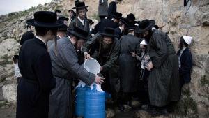 Ultraortodoxa judar samlar vatten från en källa utanför Jerusalem på Västbanken