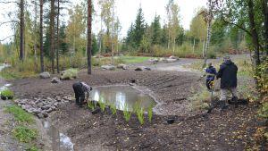 biofiltrationsarbete i Tasträsk i Sibbo 21.09.15
