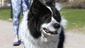 Hund i park.