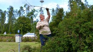 Märtha Vesterback, äldre kvinna, lyfter en kvist i luften som hon just knipsat av från en rosenbuskie.