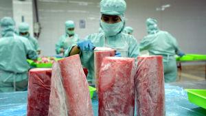 tonfiskfabrik i vietnam