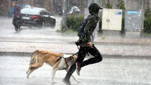 Regnet överraskade under hundpromenaden i Helsingfors den 27 juni.