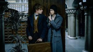 Eddie Redmayne som Newt Scamander och Katherine Waterstone som Tina står bakom en pelare, Newt har en kappsäck i handen och Tina visar att han skall vara tyst.