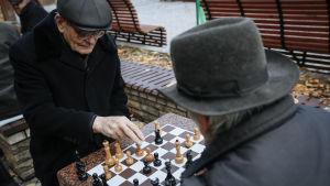 gubbar spelar skacj i Kiev