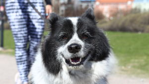 Glad hund i solen.