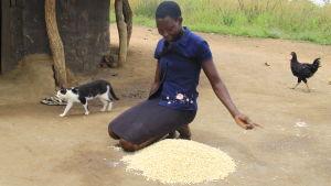 afrikansk kvinna med majs i norra uganda