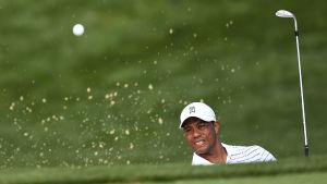 Tiger Woods, augusti 2014