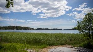 Kesäinen merimaisema kaislaisella rannalla kesäkuussa.