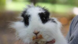 Luddig kanin.