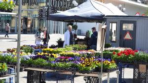 Blomförsäljning på Umeå rådhustorg