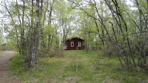 Sommarstuga i grönskan på Hanhikivi, Pyhäjoki, i närheten av Fennovoimas kärnkraftsbygge