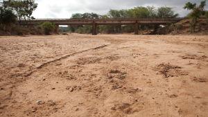 Torkad flodfåra i Kenya