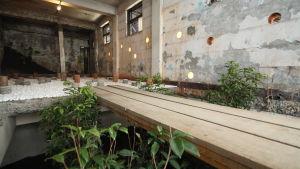 Ruin Academy i Taiwan skapar nytt liv i söndrig miljö.