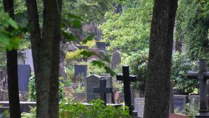 Gravar i lummig miljö på Sandudds begravningsplats.
