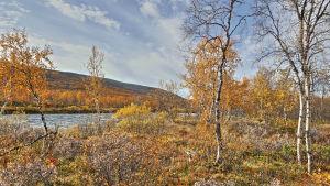 Höstfärger i Kilpisjärvi.