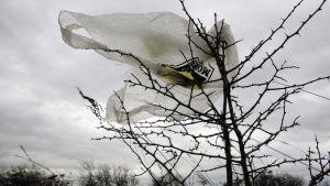 En plastpåse som har fastnat i ett träd.