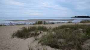 Stranden vid storsand. gröstuvor och vatten.