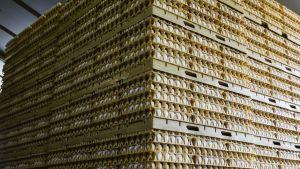 Äggkartonger staplade på varandra på en gård i Doornenburg, Nederländerna.