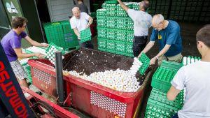 Hönsfarmare slänger ägg i en container i Onstwedde, Nederländerna den 3 augusti.