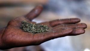 Man i katmandu med marijuana.