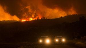 Skogsbränder rasar i Kalifornien.