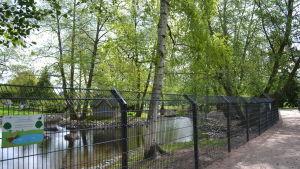 Staket kring fågelparken i Kuppisparken en solig dag.