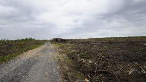 Kalhygge bredvid väg på Hanhikivi