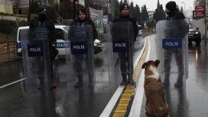 En hund tittar polisen som står och skyddar området kring den attackerade nattklubben i Istanbul.