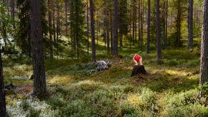 metsä, kannosta tulee esiin kädet jotka pitelevät punaista sydäntä