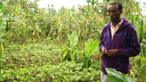 etiopidk bonde