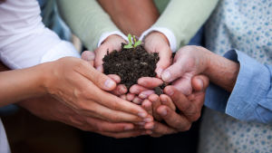 händer (olika ålders personer) som tillsammans håller i en liten mull/jordkump med en liten grön växt
