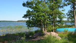 Träd och roddbåt vid havet