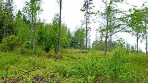 Skog på Mjölö