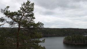 Järvinäköala Aulangolta