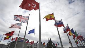 Natomedlemmarnas flaggor utanför militäralliansens huvudkontor i Bryssel.