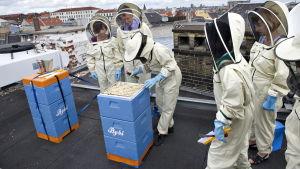 Danmarks miljöminister och EU-kommissionär tömmer bikupor i Köpenhamn