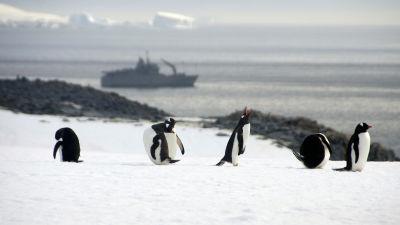 Allt fler turister i antarktis