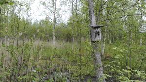 Fågelholk i träd i Hanhikivi