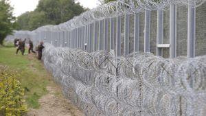 Taggtrådsstängsel mellan Ungern och Serbien.