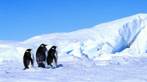 Antarktinen jäätikkö