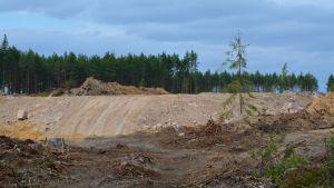 Den blivande landningsbanan syns bland en ensam gran och nerhuggna träd och grenar.
