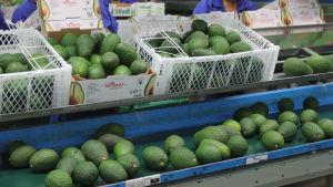 Försäljning av avokado.