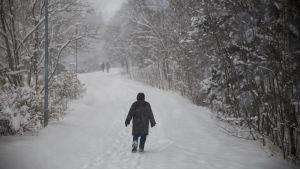 Kävelijöitä lumisessa puistossa lumisateella.