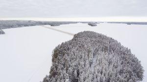 Ön Honkinen är skogsbeklädd och omgiven av Lammasjärvis isar.